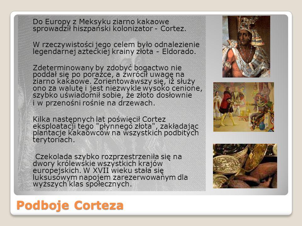 Podboje Corteza Do Europy z Meksyku ziarno kakaowe sprowadził hiszpański kolonizator - Cortez.