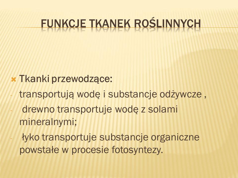 Tkanki przewodzące: - transportują wodę i substancje odżywcze, - drewno transportuje wodę z solami mineralnymi; - łyko transportuje substancje organic