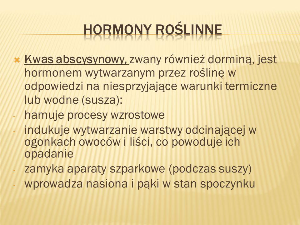 Kwas abscysynowy, zwany również dorminą, jest hormonem wytwarzanym przez roślinę w odpowiedzi na niesprzyjające warunki termiczne lub wodne (susza): -