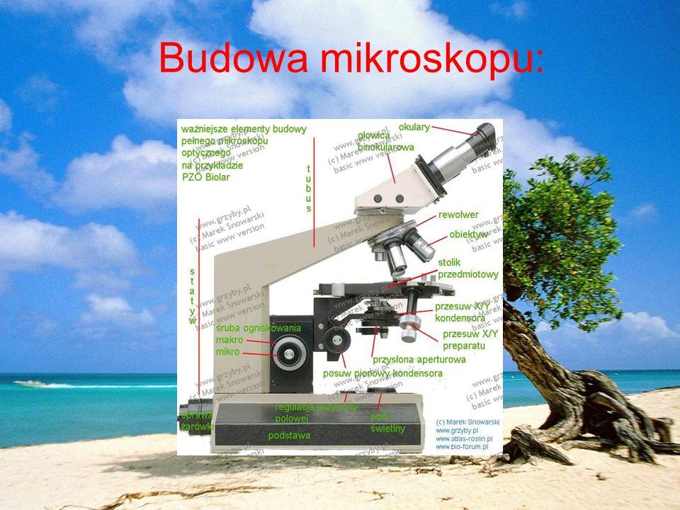 Budowa mikroskopu: