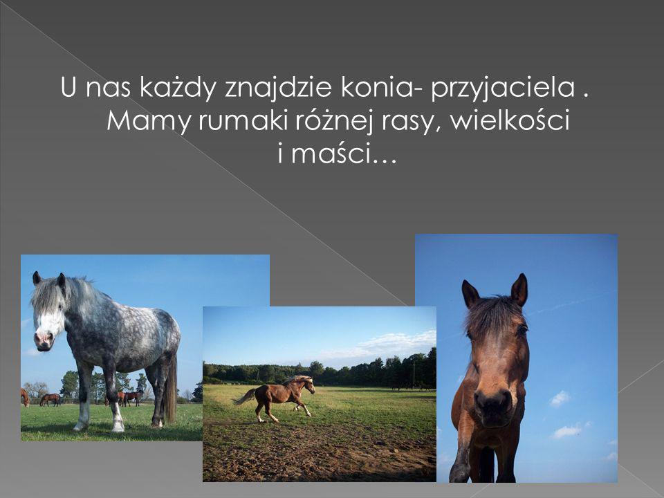 U nas każdy znajdzie konia- przyjaciela. Mamy rumaki różnej rasy, wielkości i maści…