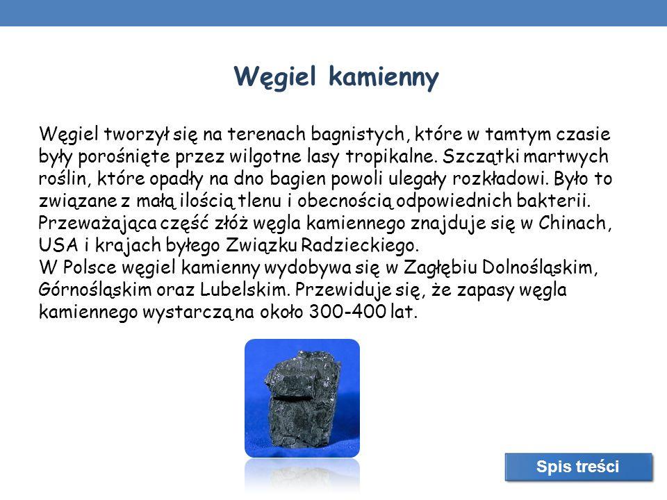 Węgiel kamienny Węgiel tworzył się na terenach bagnistych, które w tamtym czasie były porośnięte przez wilgotne lasy tropikalne. Szczątki martwych roś