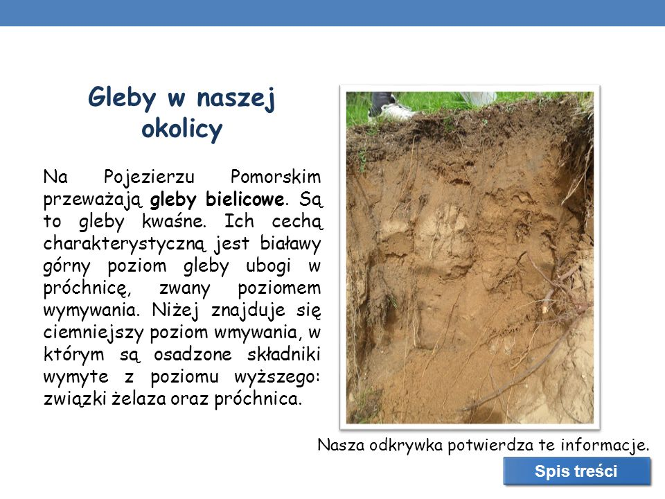 Gleby w naszej okolicy Na Pojezierzu Pomorskim przeważają gleby bielicowe. Są to gleby kwaśne. Ich cechą charakterystyczną jest białawy górny poziom g