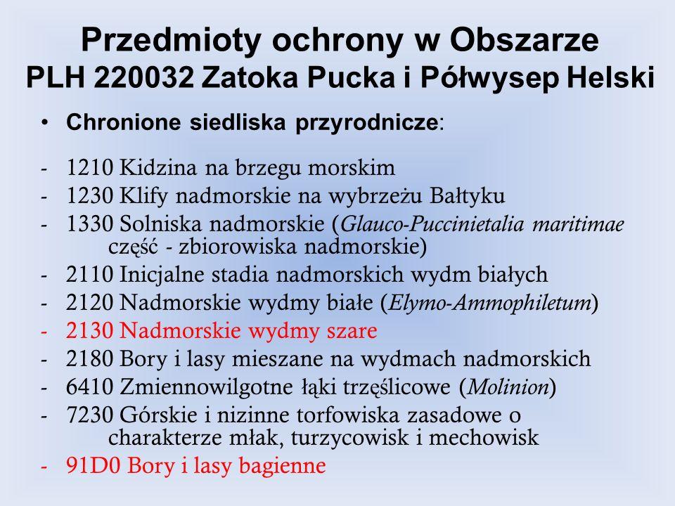Przedmioty ochrony w Obszarze PLH 220032 Zatoka Pucka i Półwysep Helski Chronione siedliska przyrodnicze: -1210 Kidzina na brzegu morskim -1230 Klify