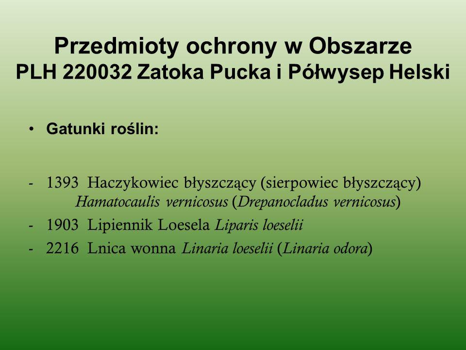 Przedmioty ochrony w Obszarze PLH 220032 Zatoka Pucka i Półwysep Helski Gatunki roślin: -1393 Haczykowiec b ł yszcz ą cy (sierpowiec b ł yszcz ą cy) H