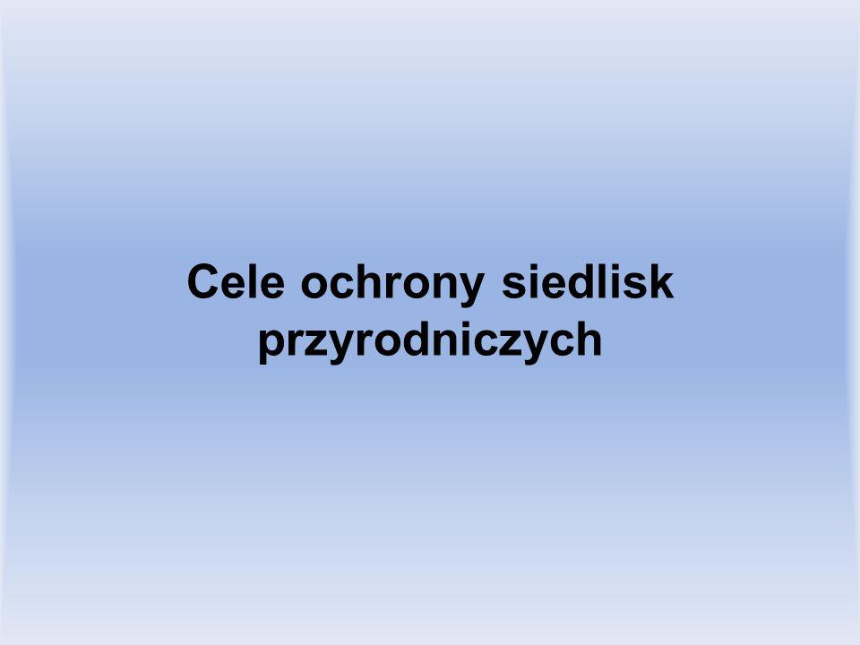 1393 Haczykowiec błyszczący (sierpowiec błyszczący) Hamatocaulis vernicosus (Drepanocladus vernicosus) 1.