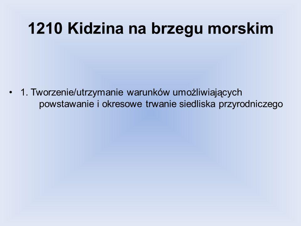 1210 Kidzina na brzegu morskim 1. Tworzenie/utrzymanie warunków umożliwiających powstawanie i okresowe trwanie siedliska przyrodniczego