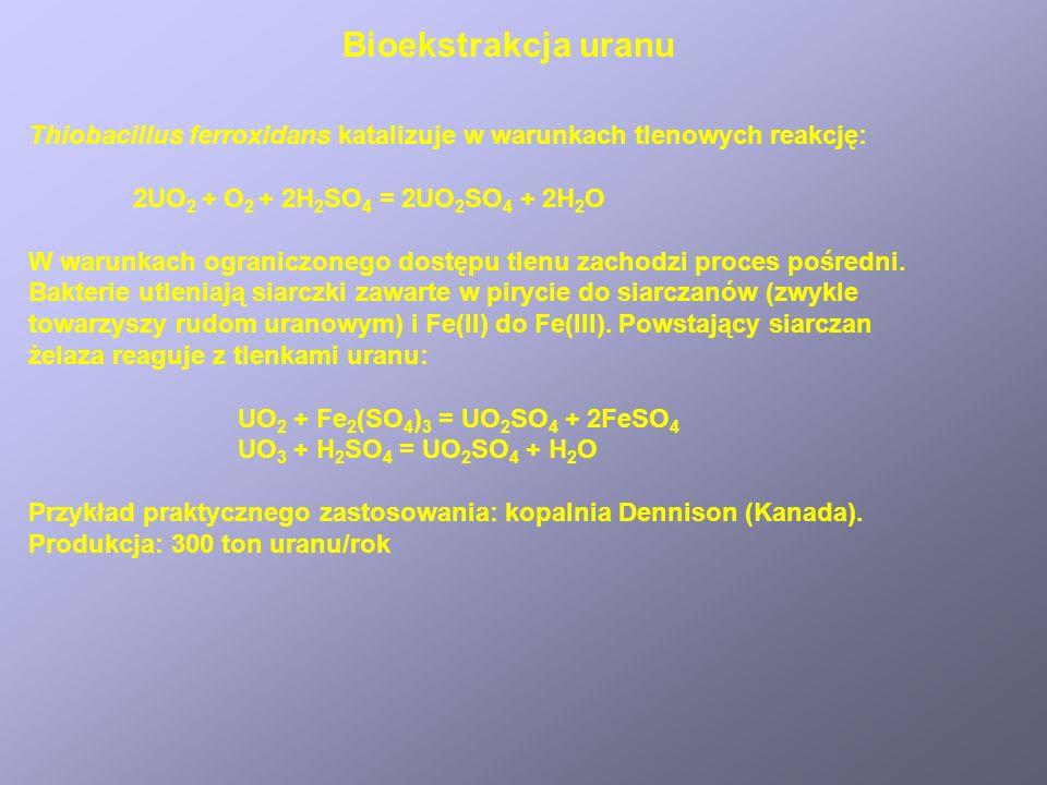 Bioekstrakcja uranu Thiobacillus ferroxidans katalizuje w warunkach tlenowych reakcję: 2UO 2 + O 2 + 2H 2 SO 4 = 2UO 2 SO 4 + 2H 2 O W warunkach ogran