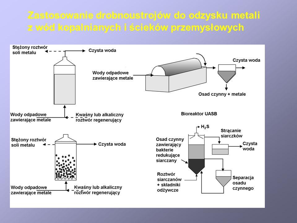 Zastosowanie drobnoustrojów do odzysku metali z wód kopalnianych i ścieków przemysłowych