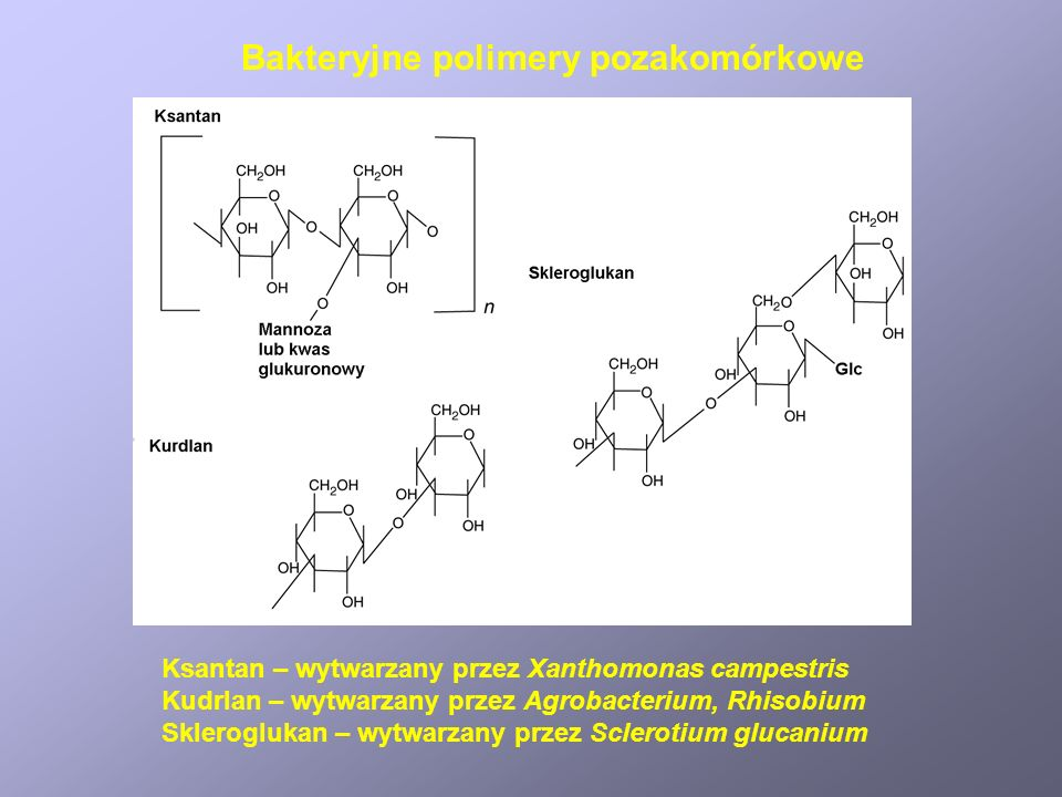 Bakteryjne polimery pozakomórkowe Ksantan – wytwarzany przez Xanthomonas campestris Kudrlan – wytwarzany przez Agrobacterium, Rhisobium Skleroglukan – wytwarzany przez Sclerotium glucanium
