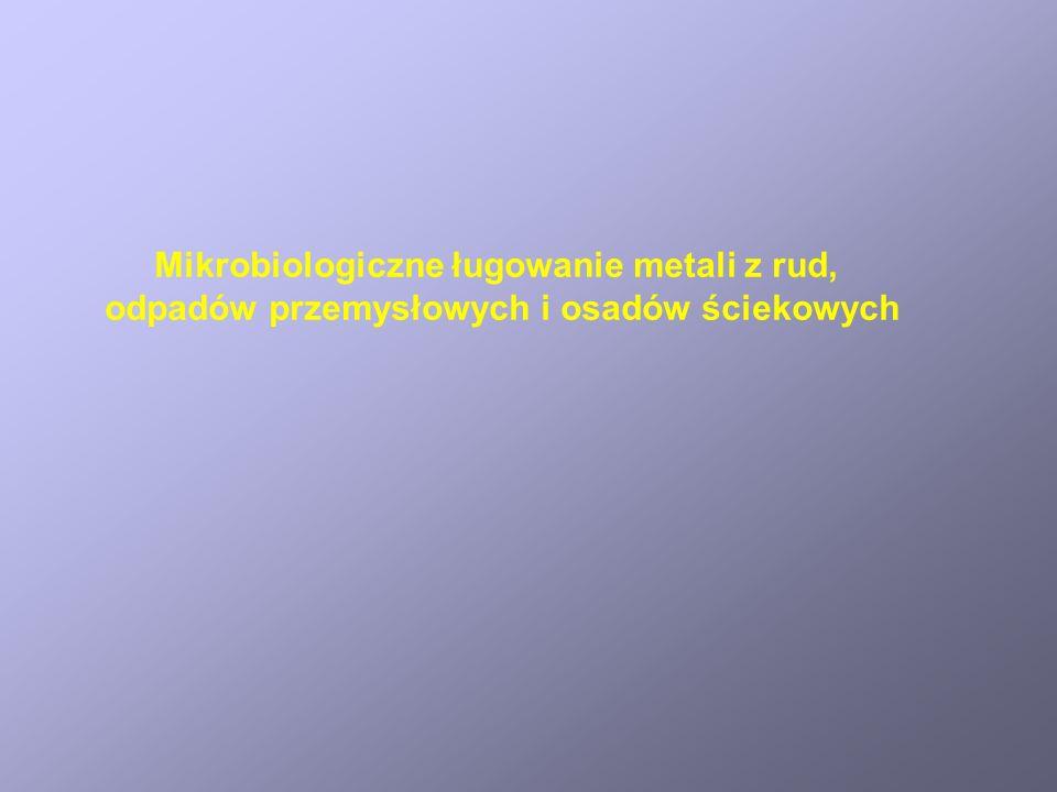Mikrobiologiczne ługowanie metali z rud, odpadów przemysłowych i osadów ściekowych