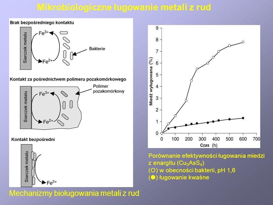 Porównanie efektywności ługowania miedzi z enargitu (Cu 3 AsS 4 ) ( ) w obecności bakterii, pH 1,6 ( ) ługowanie kwaśne Mechanizmy bioługowania metali