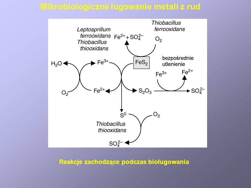 Mikrobiologiczne ługowanie metali z rud Reakcje zachodzące podczas bioługowania