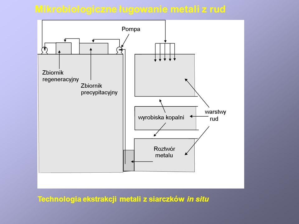 Mikrobiologiczne ługowanie metali z rud Odzyskiwanie miedzi z hałd kopalnianych
