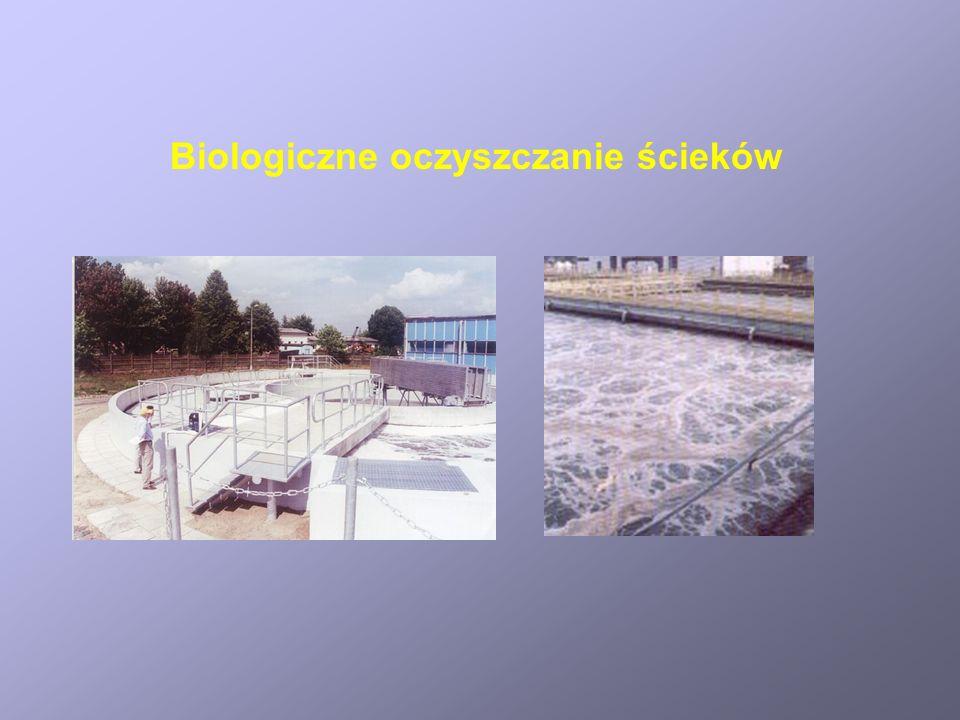 Biologiczne oczyszczanie ścieków