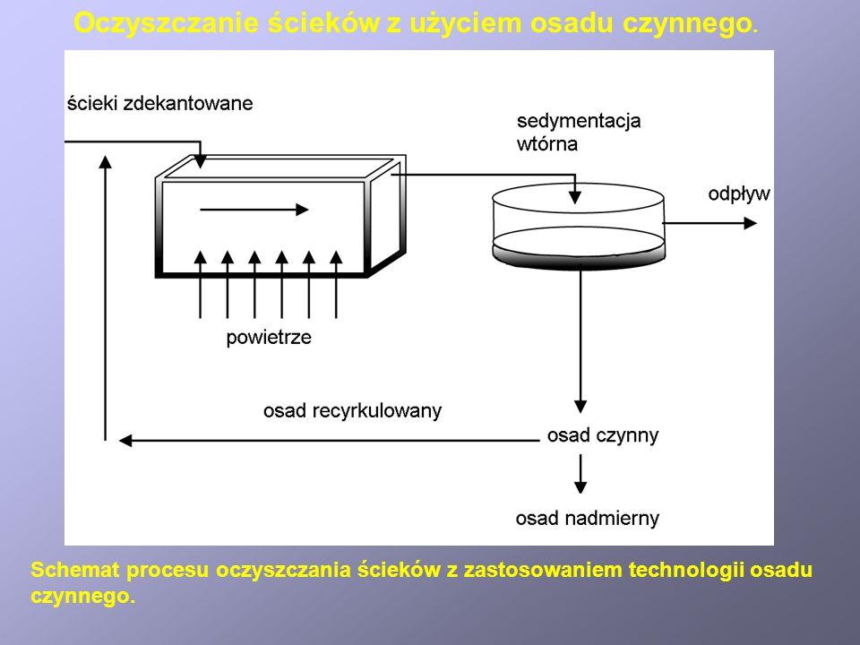 Schemat procesu oczyszczania ścieków z zastosowaniem technologii osadu czynnego.