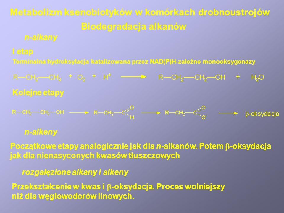 Biodegradacja alkanów n-alkany I etap Terminalna hydroksylacja katalizowana przez NAD(P)H-zależne monooksygenazy Kolejne etapy n-alkeny Początkowe eta