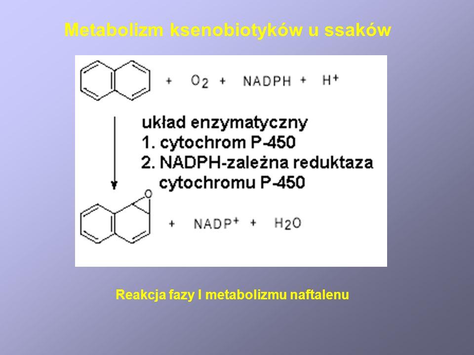 Reakcja fazy I metabolizmu naftalenu Metabolizm ksenobiotyków u ssaków