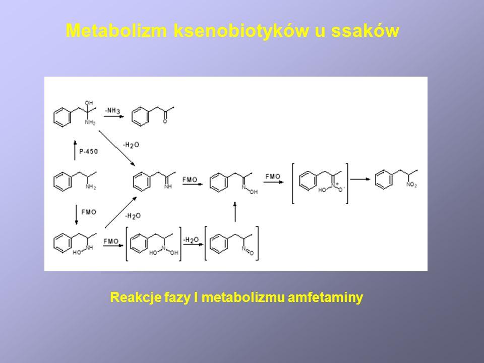 Reakcje fazy I metabolizmu amfetaminy Metabolizm ksenobiotyków u ssaków