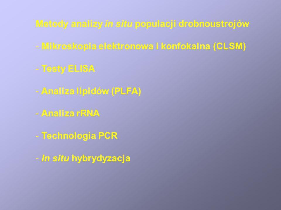 Metody analizy in situ populacji drobnoustrojów - Mikroskopia elektronowa i konfokalna (CLSM) - Testy ELISA - Analiza lipidów (PLFA) - Analiza rRNA -