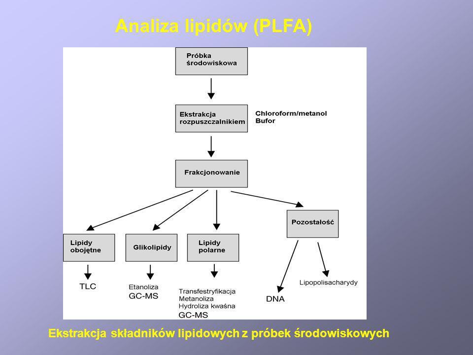 Ekstrakcja składników lipidowych z próbek środowiskowych Analiza lipidów (PLFA)