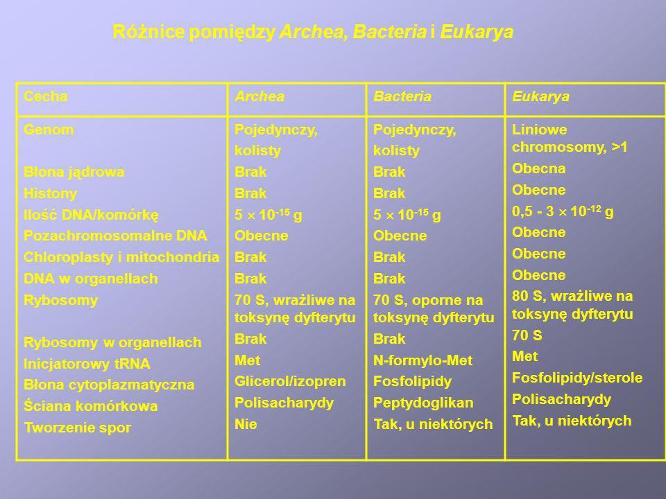 CechaArcheaBacteriaEukarya Genom Błona jądrowa Histony Ilość DNA/komórkę Pozachromosomalne DNA Chloroplasty i mitochondria DNA w organellach Rybosomy