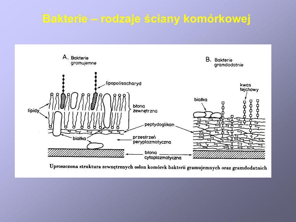 Bakteria Epulopiscium fishelsoni jest największą znaną bakterią.