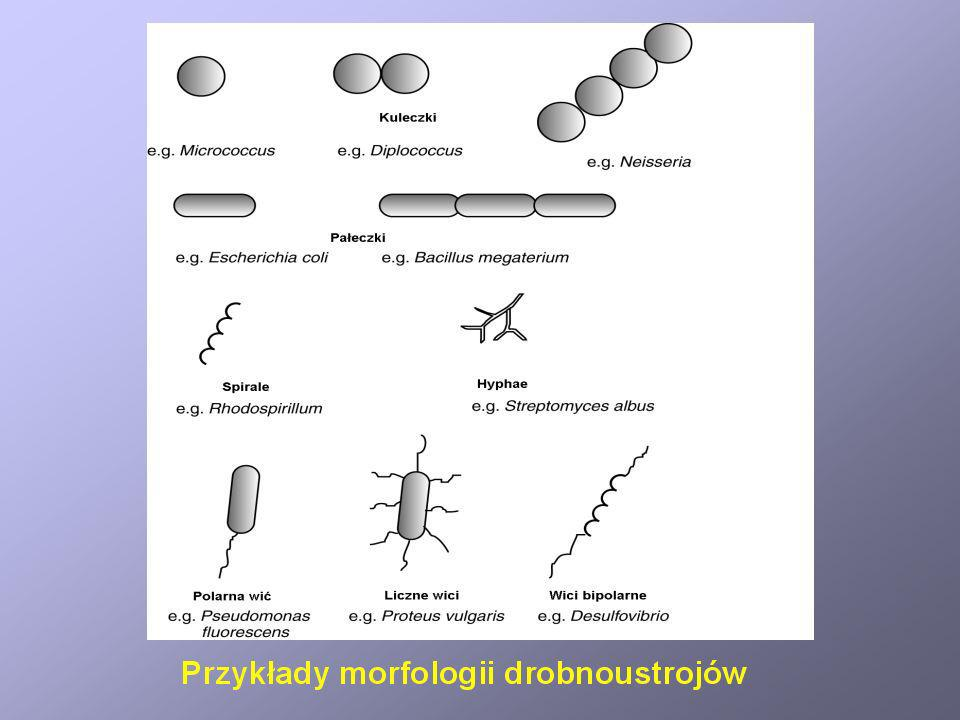 Wpływ obecności tlenu na wzrost różnych grup drobnoustrojów