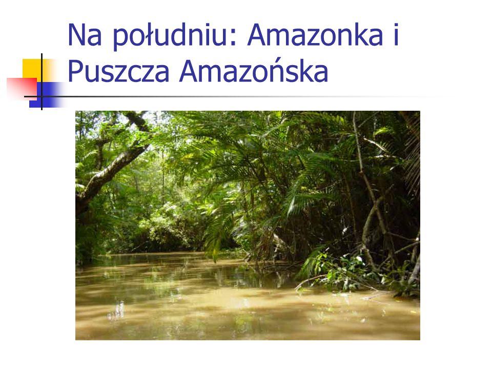 Na południu: Amazonka i Puszcza Amazońska