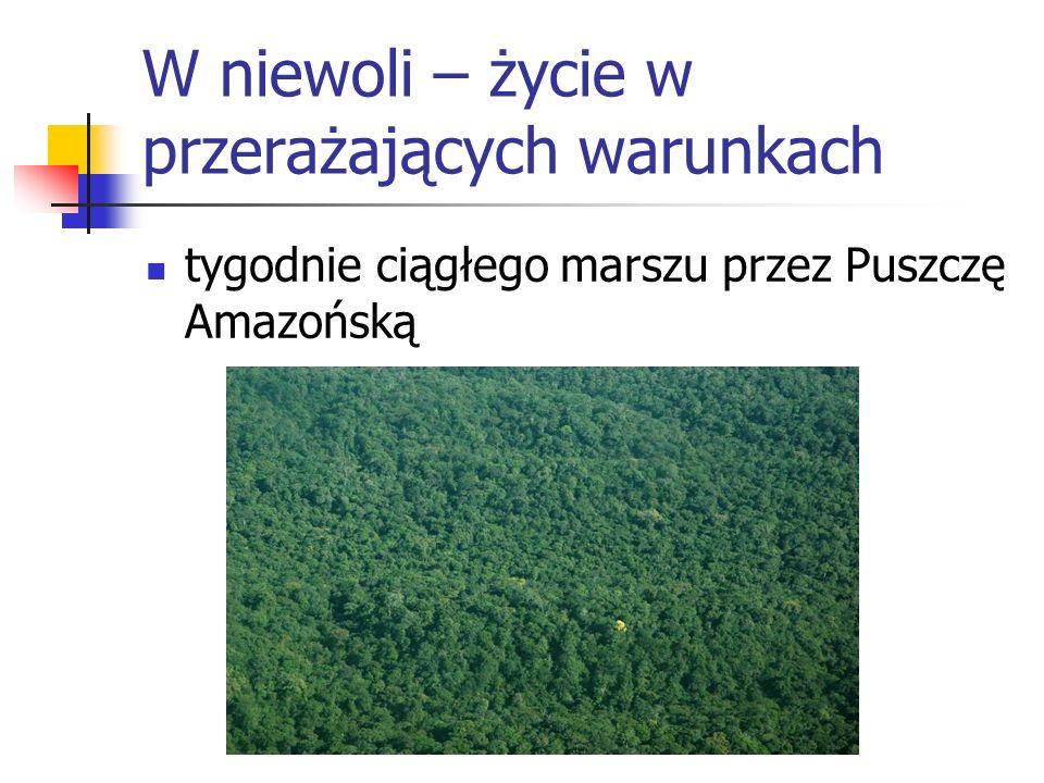 W niewoli – życie w przerażających warunkach tygodnie ciągłego marszu przez Puszczę Amazońską