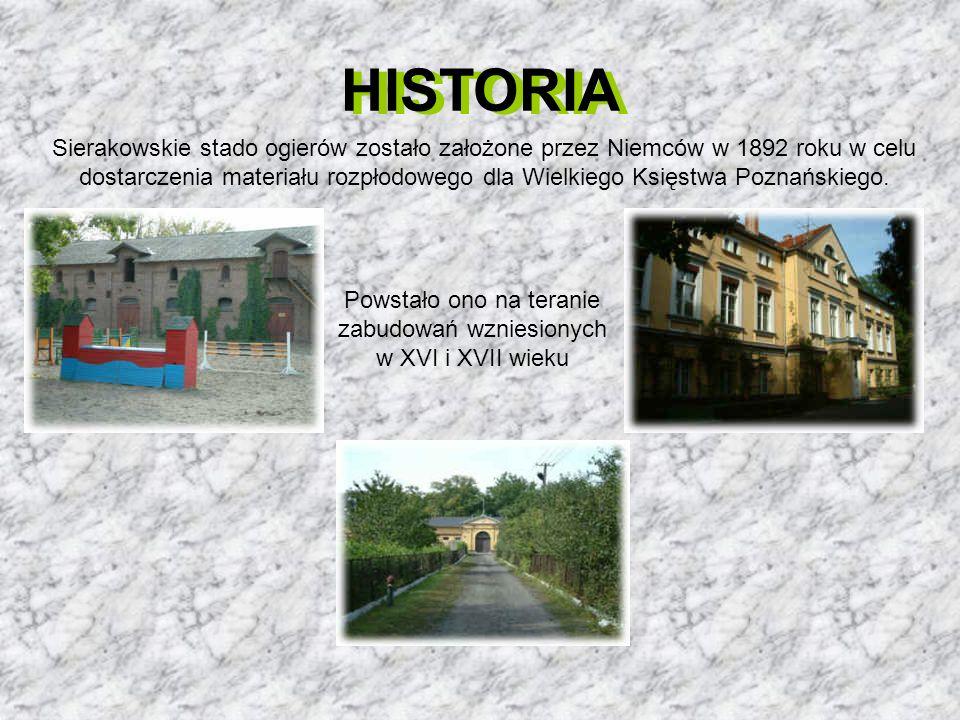 HISTORIA Sierakowskie stado ogierów zostało założone przez Niemców w 1892 roku w celu dostarczenia materiału rozpłodowego dla Wielkiego Księstwa Pozna