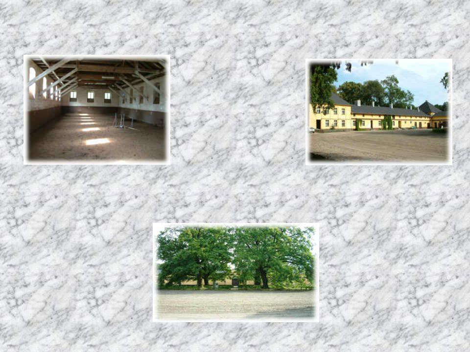 Stado ogierów oprócz wypożyczania Ogierów na punkty rozpłodowe prowadzi również szkółkę i klub jeździecki.