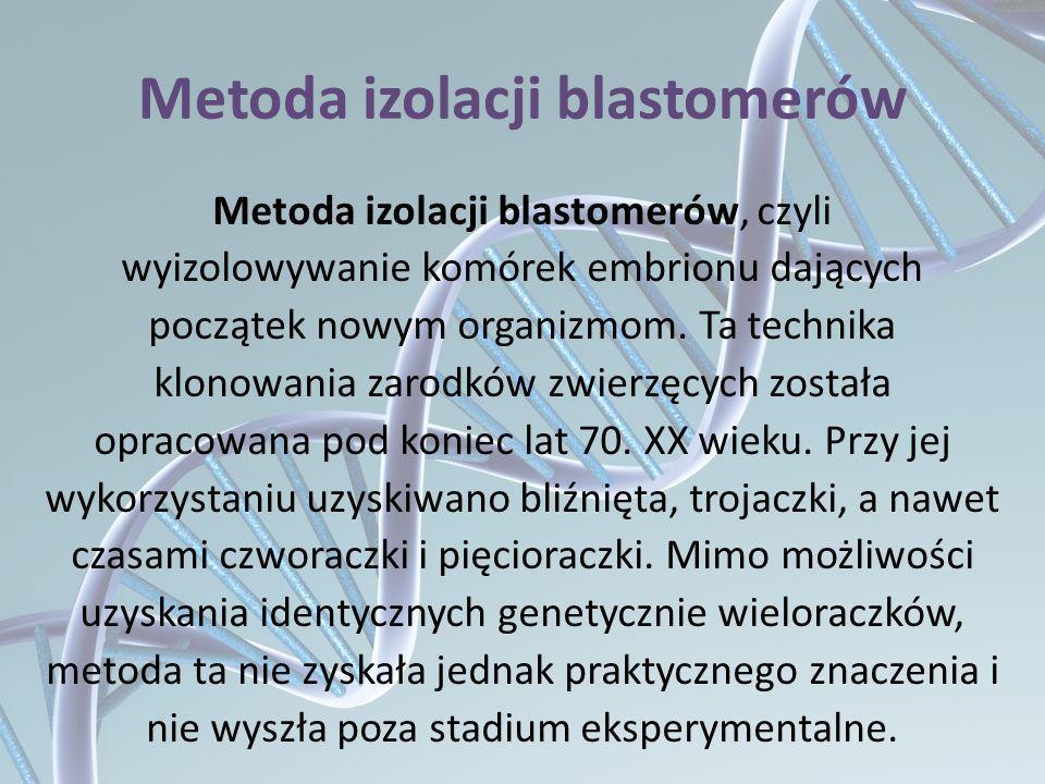 Metoda izolacji blastomerów Metoda izolacji blastomerów, czyli wyizolowywanie komórek embrionu dających początek nowym organizmom. Ta technika klonowa