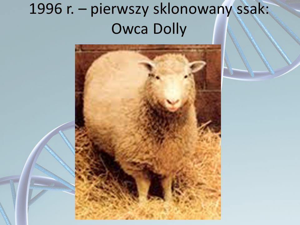 1996 r. – pierwszy sklonowany ssak: Owca Dolly