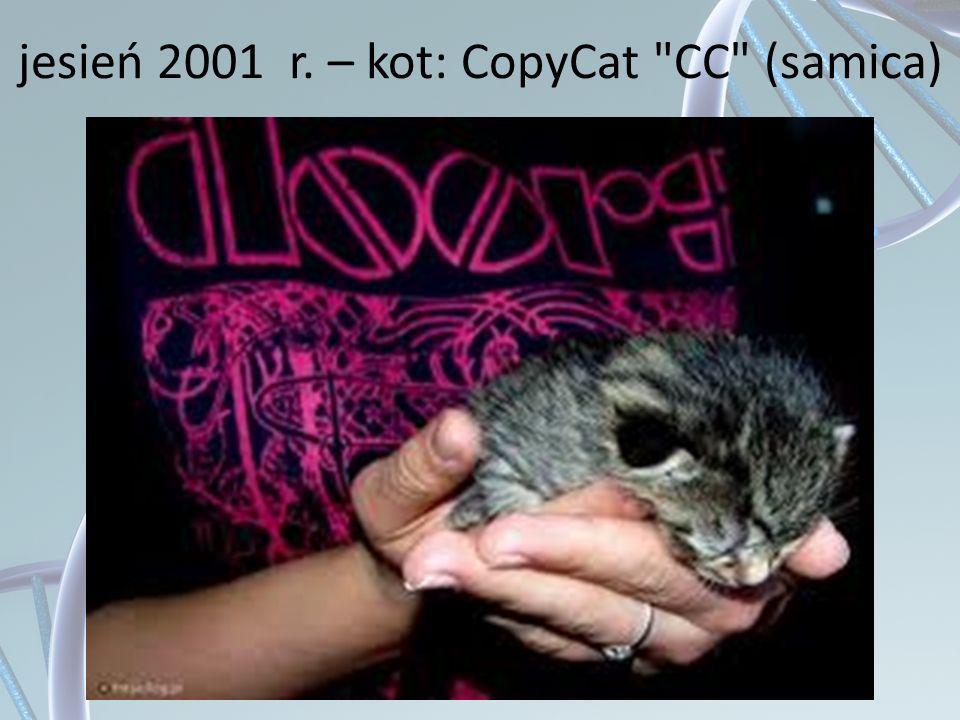 jesień 2001 r. – kot: CopyCat