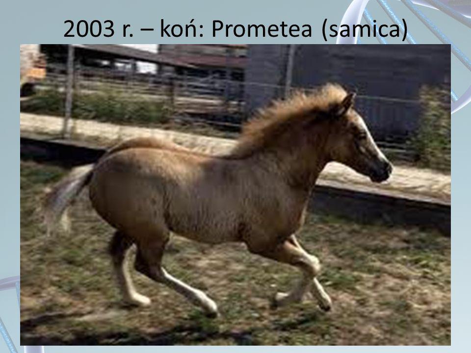 2003 r. – koń: Prometea (samica)
