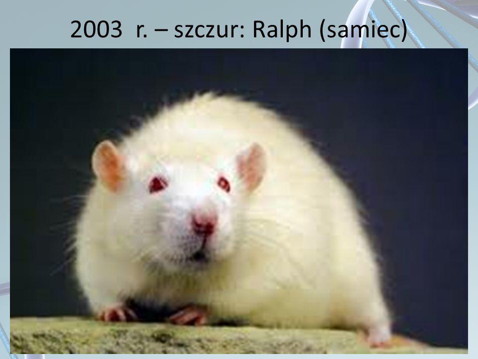 2003 r. – szczur: Ralph (samiec)