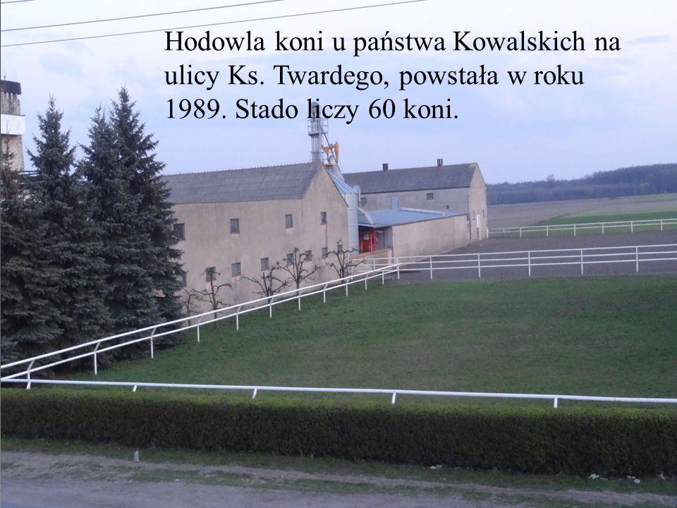 Hodowla koni u państwa Kowalskich na ulicy Ks. Twardego, powstała w rok u 1989. Stado liczy 60 koni.