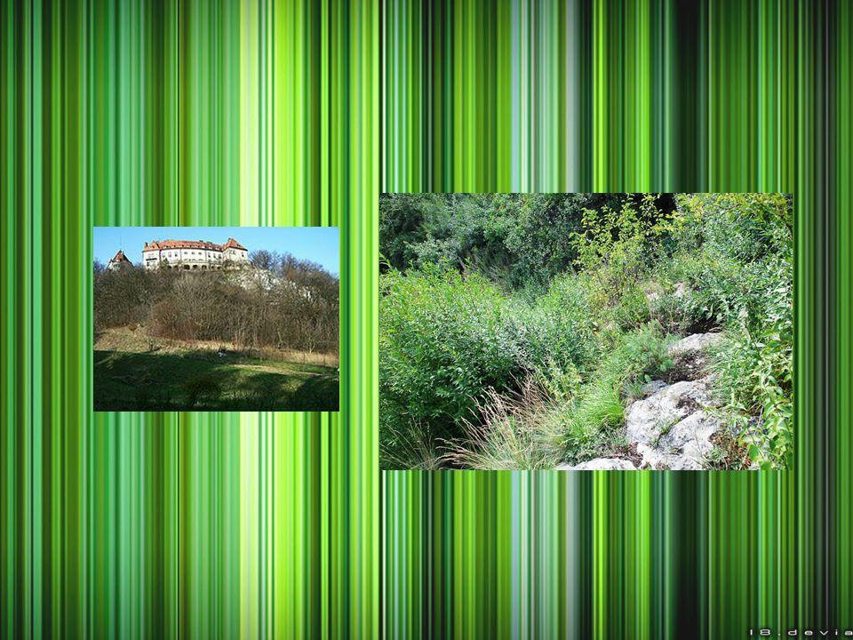 Rezerwat przyrody Kornuty INFORMACJE OGÓLNE Lokalizacja: Magurski Park Narodowy Rodzaj rezerwatu: przyrody nieożywionej Charakter: częściowy Rok powstania: 1953 Powierzchnia: 11,9 ha