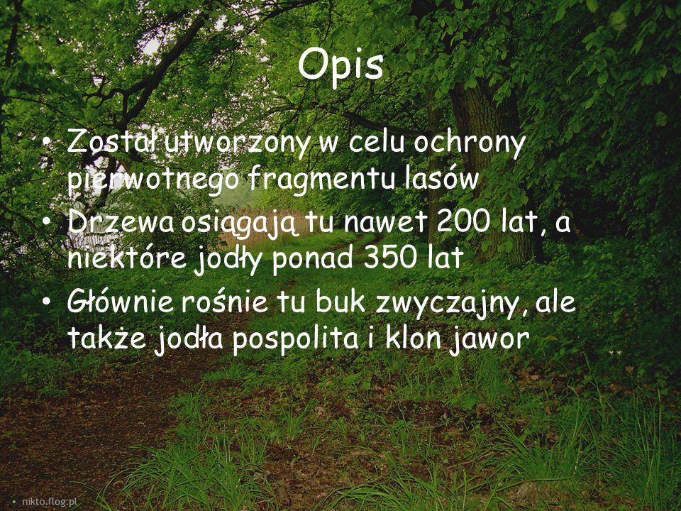 Opis Został utworzony w celu ochrony pierwotnego fragmentu lasów Drzewa osiągają tu nawet 200 lat, a niektóre jodły ponad 350 lat Głównie rośnie tu bu