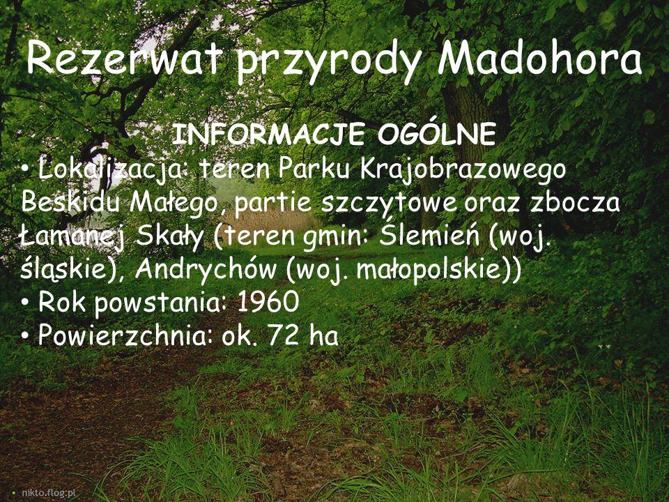 Rezerwat przyrody Madohora INFORMACJE OGÓLNE Lokalizacja: teren Parku Krajobrazowego Beskidu Małego, partie szczytowe oraz zbocza Łamanej Skały (teren