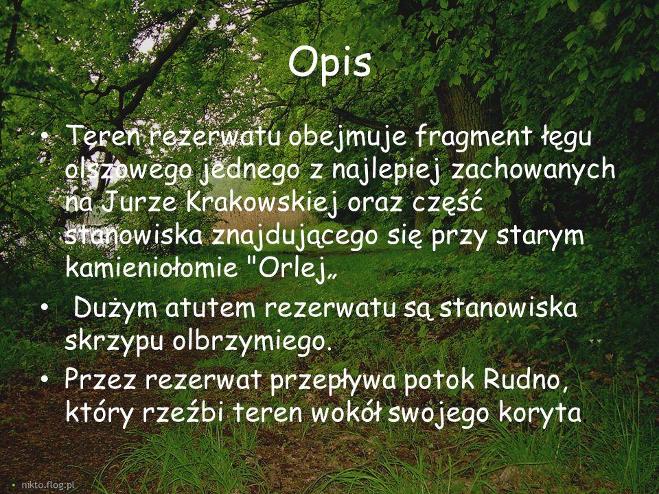 Opis Teren rezerwatu obejmuje fragment łęgu olszowego jednego z najlepiej zachowanych na Jurze Krakowskiej oraz część stanowiska znajdującego się przy