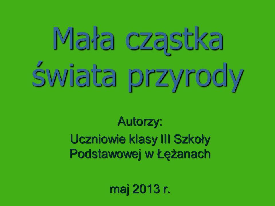 Mała cząstka świata przyrody Autorzy: Uczniowie klasy III Szkoły Podstawowej w Łężanach maj 2013 r.