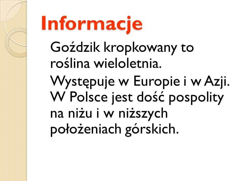 Informacje Goździk kropkowany to roślina wieloletnia. Występuje w Europie i w Azji. W Polsce jest dość pospolity na niżu i w niższych położeniach górs