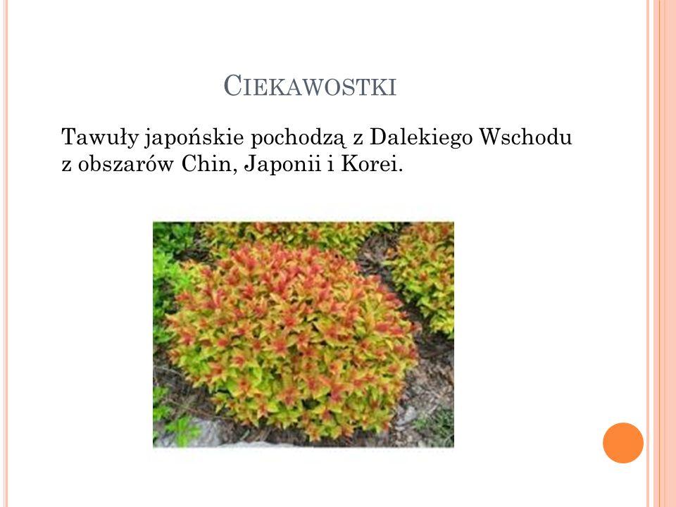 C IEKAWOSTKI Tawuły japońskie pochodzą z Dalekiego Wschodu z obszarów Chin, Japonii i Korei.