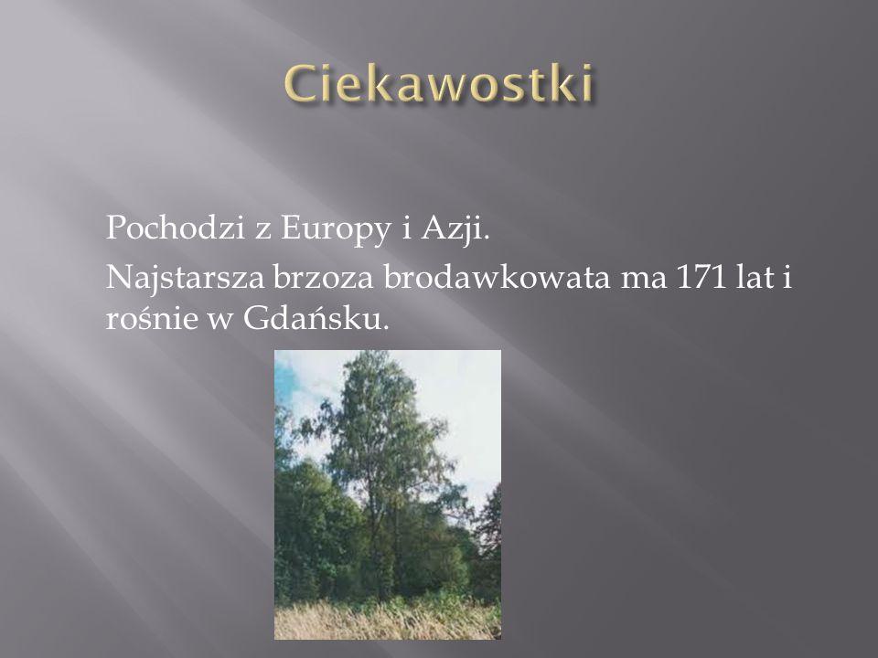 Pochodzi z Europy i Azji. Najstarsza brzoza brodawkowata ma 171 lat i rośnie w Gdańsku.
