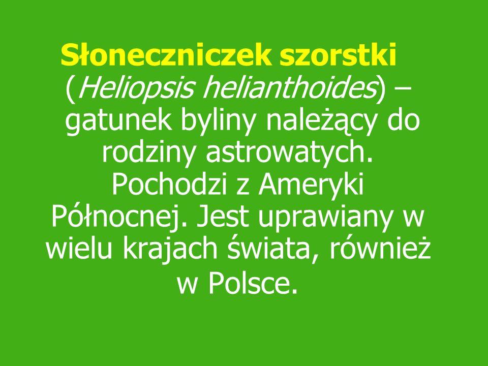 Słoneczniczek szorstki (Heliopsis helianthoides) – gatunek byliny należący do rodziny astrowatych. Pochodzi z Ameryki Północnej. Jest uprawiany w wiel
