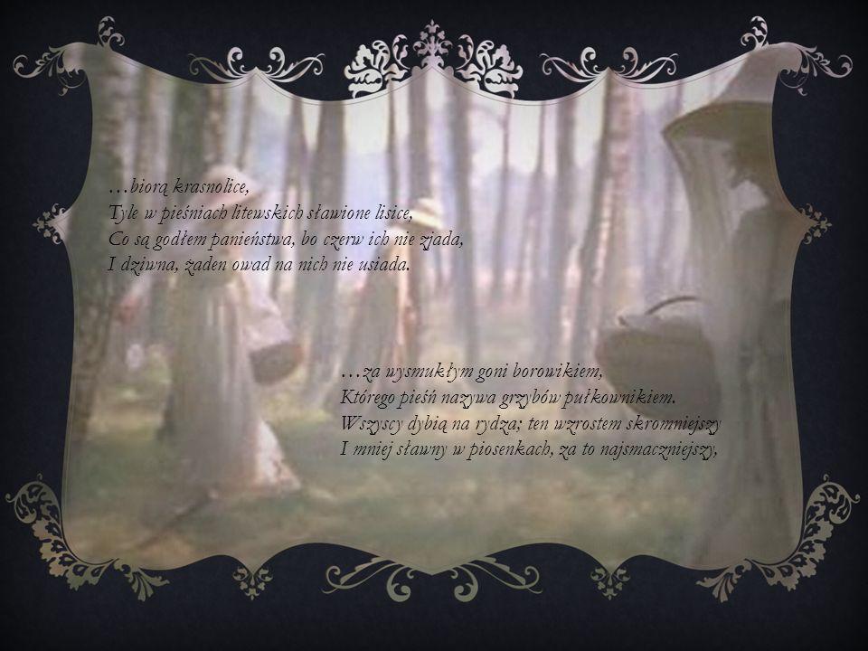 …biorą krasnolice, Tyle w pieśniach litewskich sławione lisice, Co są godłem panieństwa, bo czerw ich nie zjada, I dziwna, żaden owad na nich nie usia
