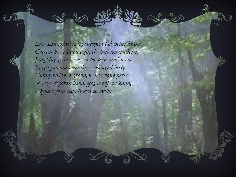 Lasy Litewskie! tak poważne i tak pełne krasy!- Czeremchy oplatane dzikich chmielów wieńcem, Jarzębiny ze świeżym pasterskim rumieńcem, Leszczyna jak