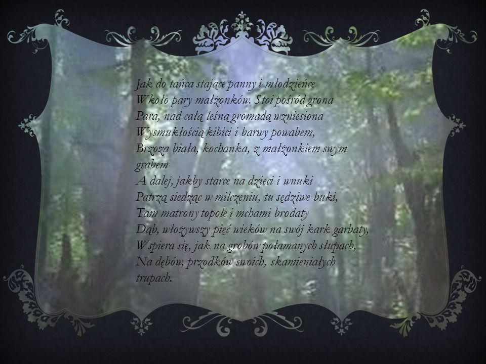 Jak do tańca stające panny i młodzieńce Wkoło pary małżonków. Stoi pośród grona Para, nad całą leśną gromadą wzniesiona Wysmukłością kibici i barwy po